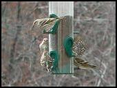 Siskins on a winter day
